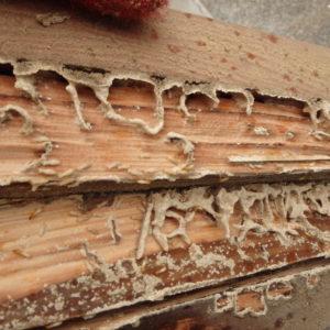 宇佐市の倉庫でのシロアリ駆除のサムネイル