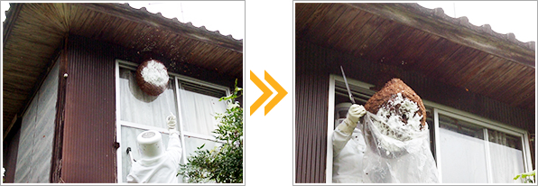 ハチの巣の撤去・殺虫処理