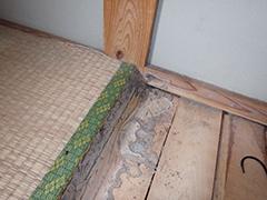 イエシロアリによる畳被害