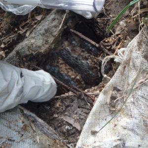 オオスズメバチ駆除を吉富町でのサムネイル
